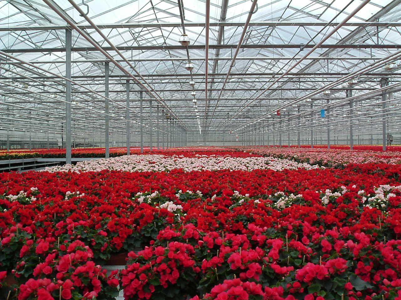 Bloemen velden in De Lier