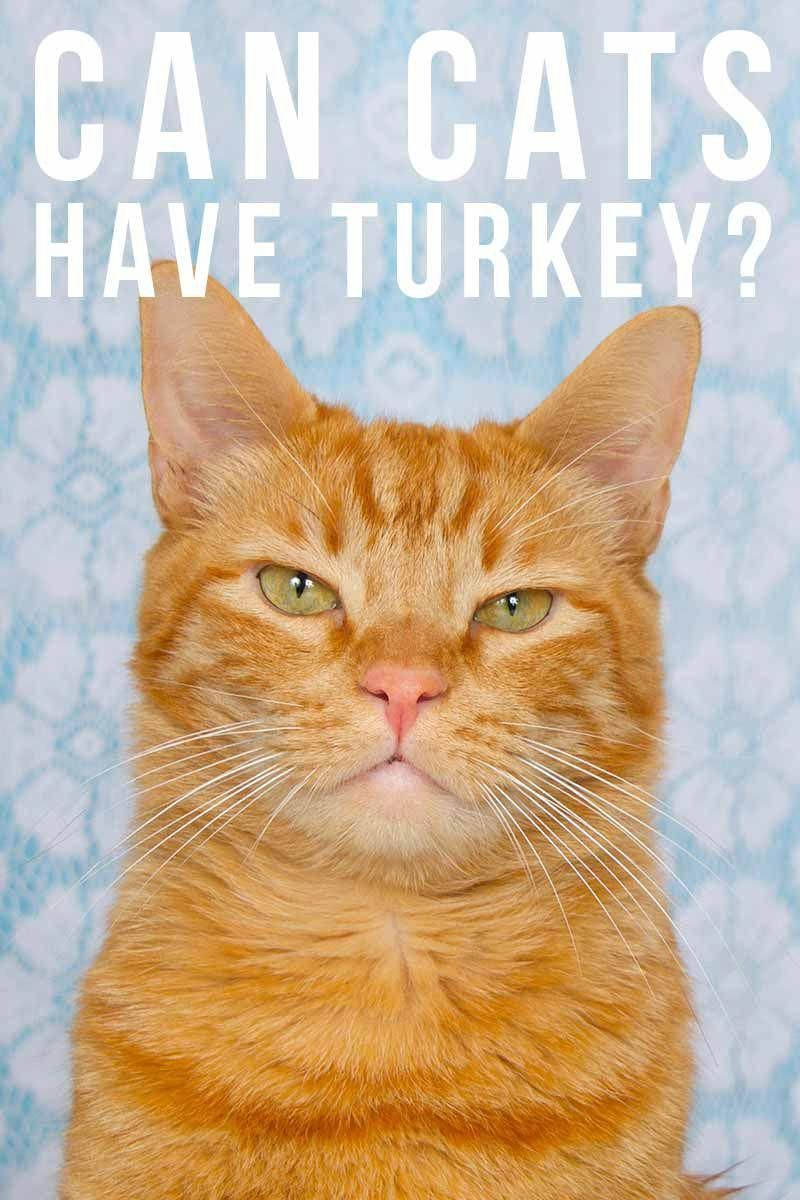 Can Cats Have Turkey Cat Food And Feeding Advice Catfacts Catandkittens Cat Site Cat Having Kittens Cat Care