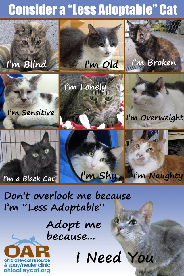 Open Your Heart To A Less Adoptable Pet Animal Stories Animal Help Animals Animal Rescue