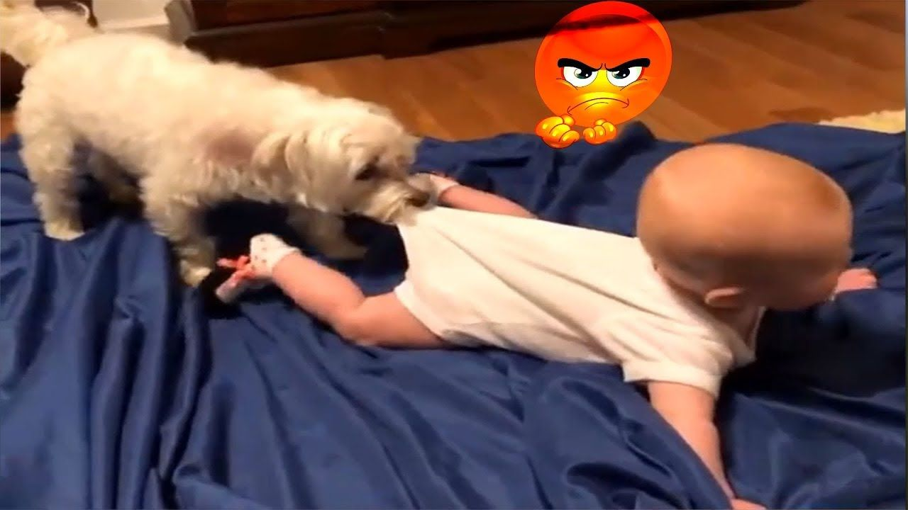 Funny Dog And Cat Videos For Kids To Watch Compilation Funny