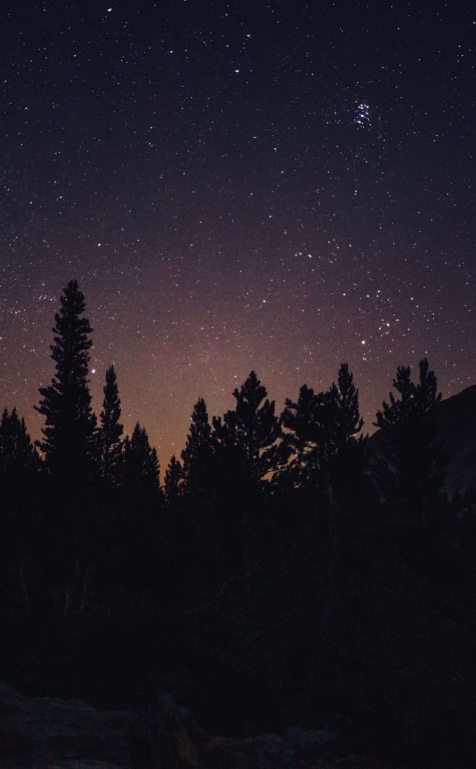 950x1534 Night Out Tree Starry Sky Forest Silhouette Nature Wallpaper Night Sky Wallpaper Forest Silhouette Sky Aesthetic