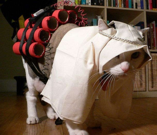 halloween suicide bomber cat pictures and images - Funny Cat Halloween