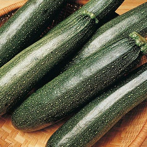 Explore Squash Vegetable Growing Zucchini And More