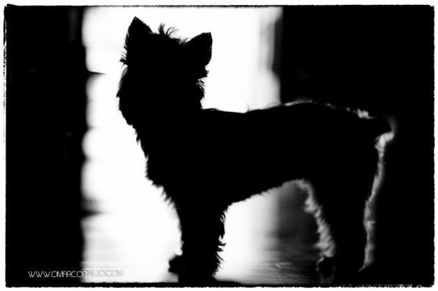 Omar Cornejo, Fotógrafo de mascotas.   Lima - Perú