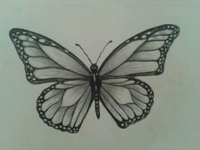 Butterfly Drawing Tumblr Nature In 2019 Butterfly Sketch