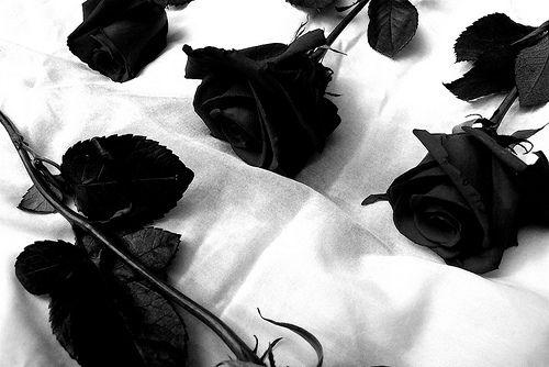 IMAGENS DE LUTO PARA WHATSAPP E FACEBOOK - IMAGENS E FOTOS | Black rose,  Black and white pictures, Black and white photography
