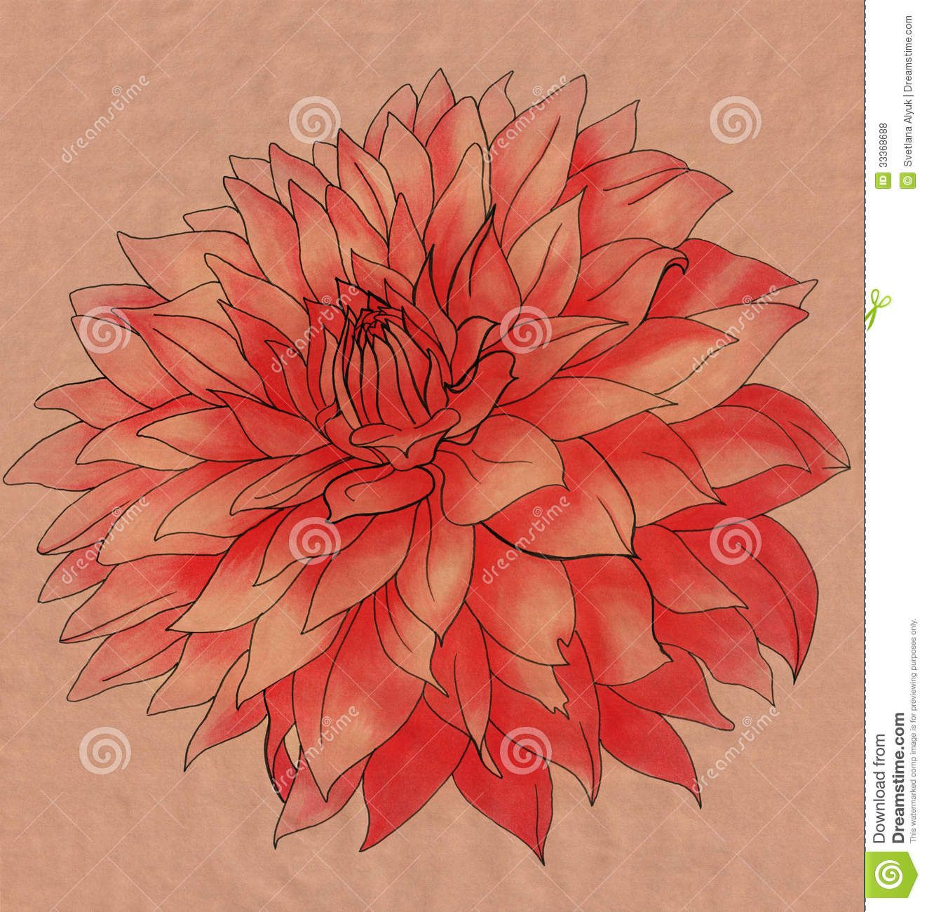 Dahlia Drawings Dahlia Flower Drawing Red Flower On Vintage