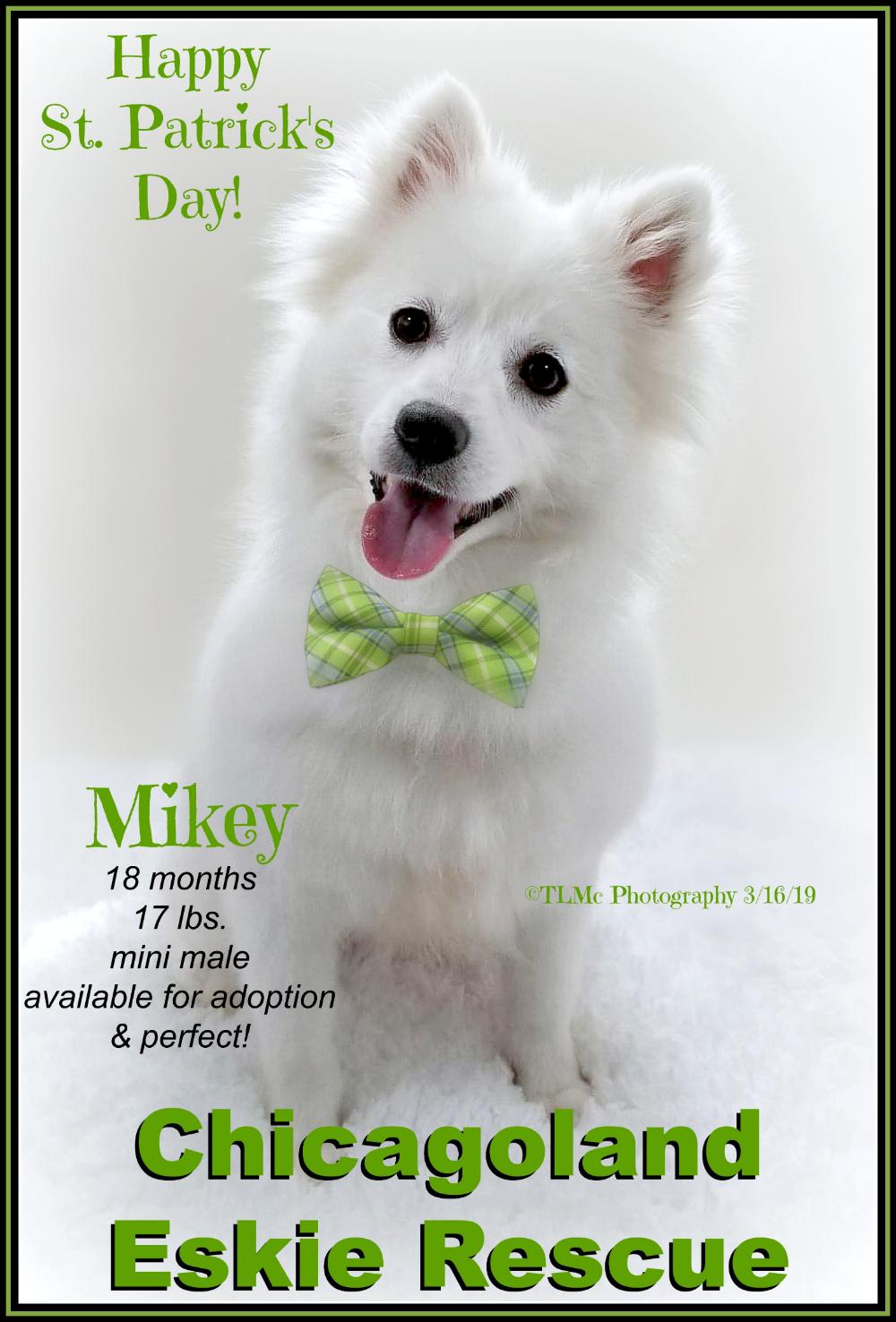 Adopt Mike On Adoption Pet Adoption Pet Care Tips