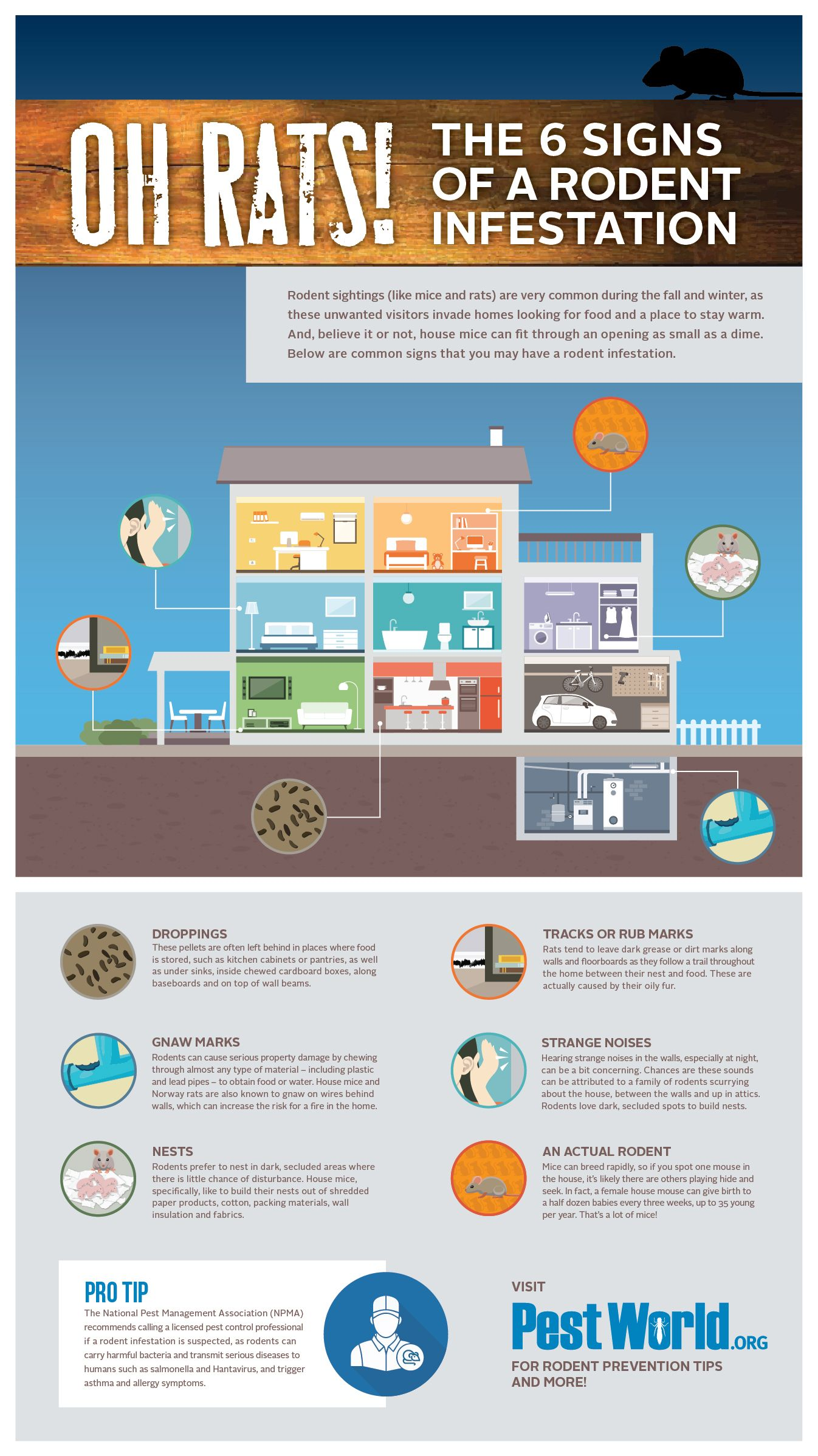 Rodent Signs Infographic Rodent Infestation Infestations Pest Control