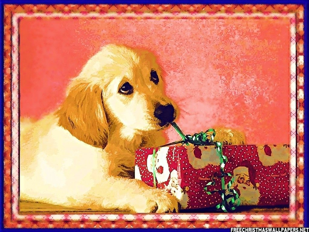 Dogs celebrate Christmas wallpapers and images wallpapers