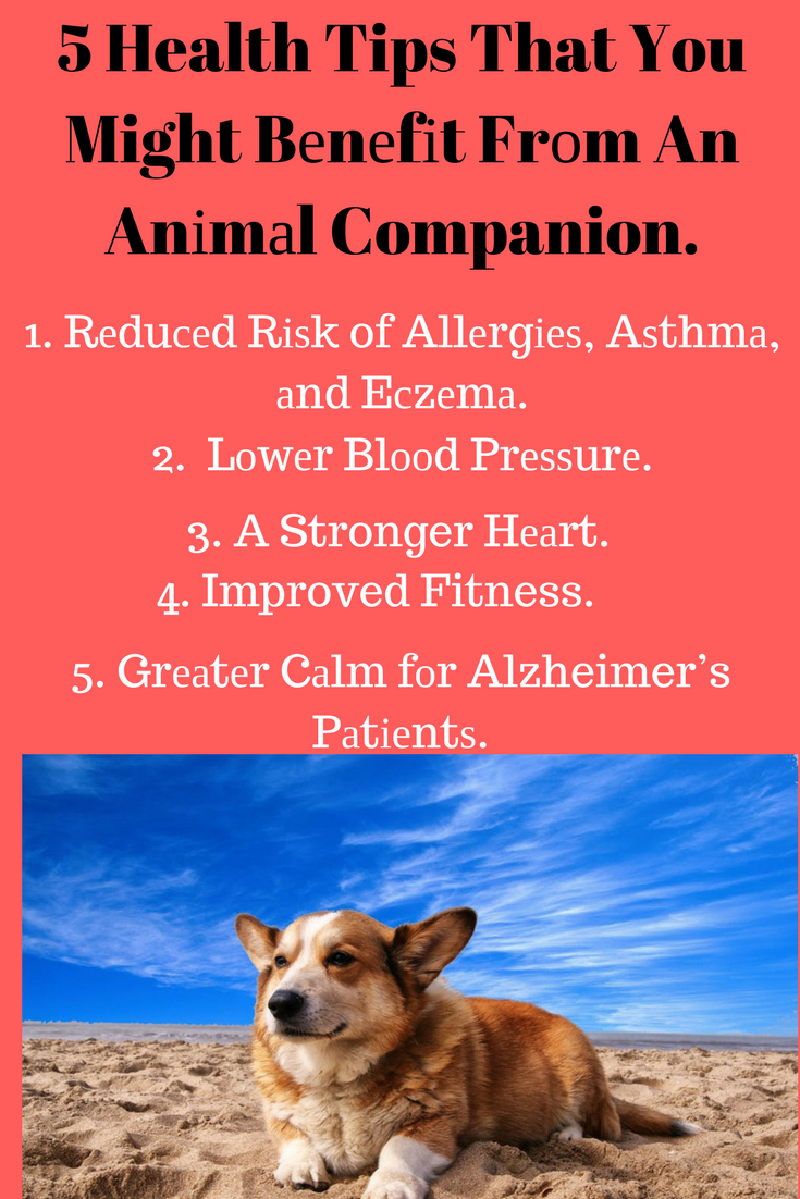 Benefits And Keeping Pets Strong Pets Care Tips Pet Health Holistic Dog Care Pet Benefits