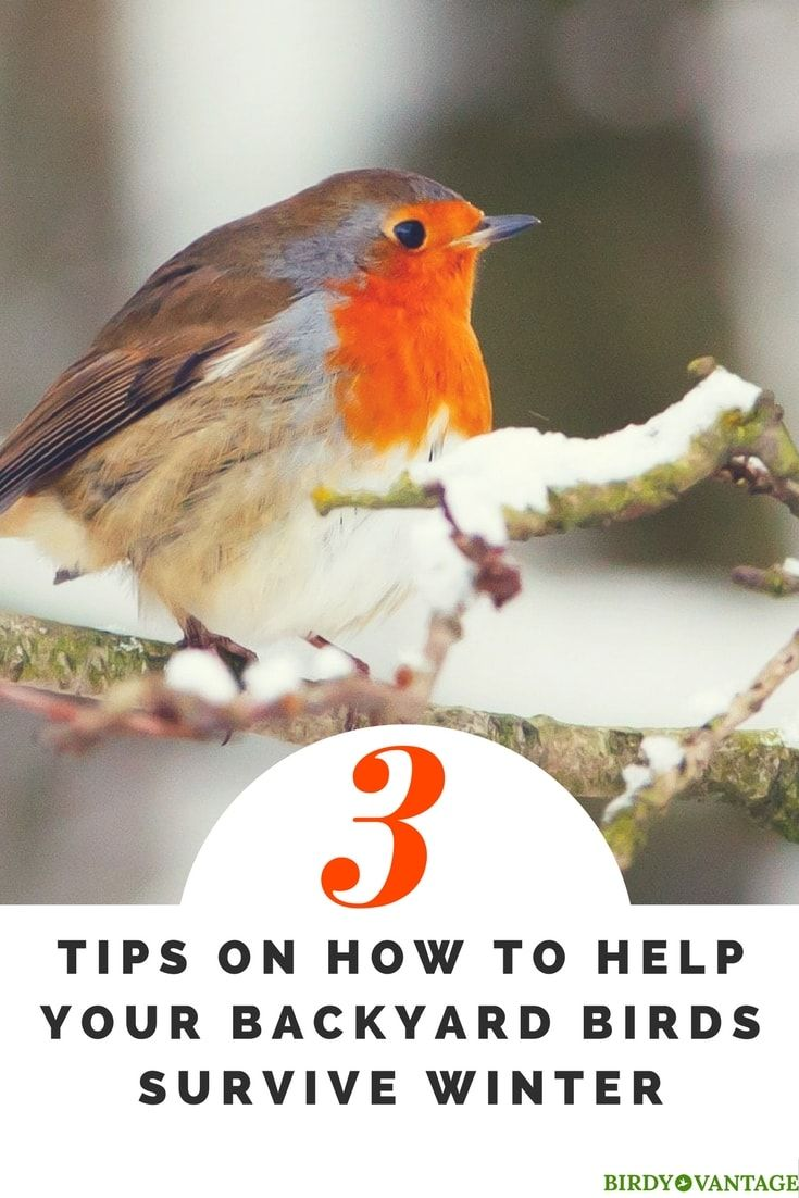 3 Tips on How to Help Your Backyard Birds Survive Winter ...