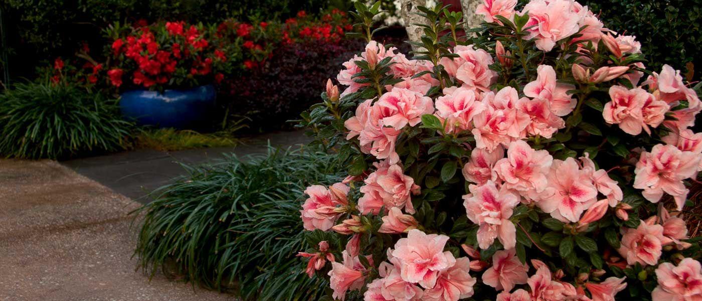 The Family Tree Garden Center Online Planting Shrubs Garden