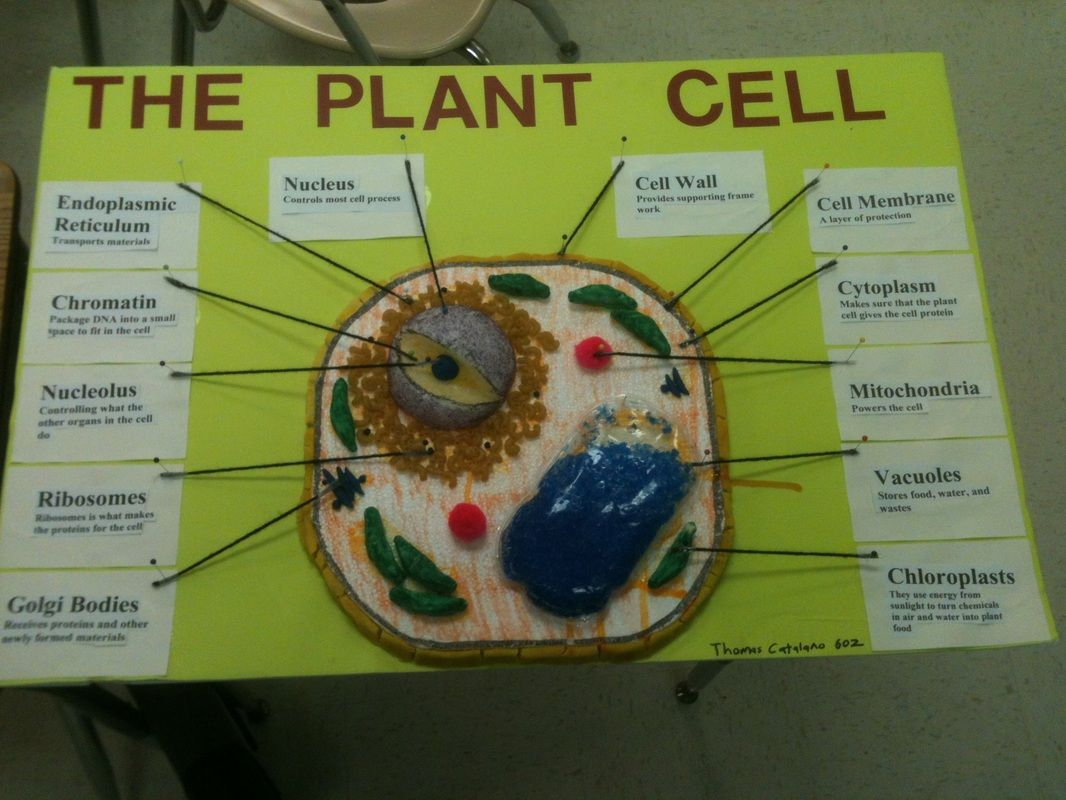 plant cell model project materials | the project | earth science