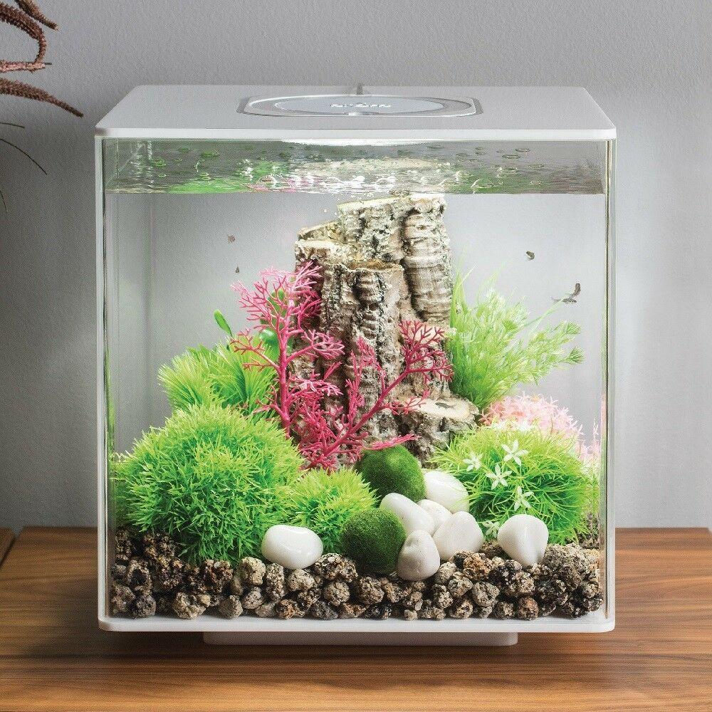 Biorb Cube 30 By Oase Aquarium Kit With Aeration Filtration Lighting Ebay Fish Tank Design Aquarium Biorb Fish Tank