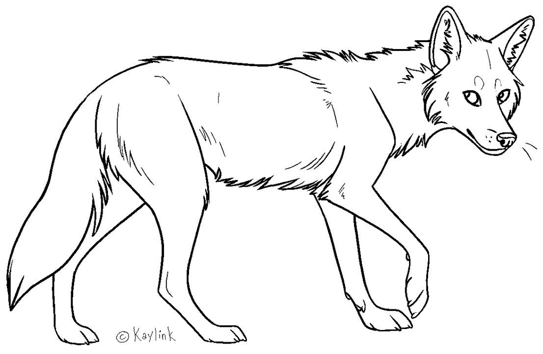 Browse Art DeviantArt Line drawing, Coyote drawing