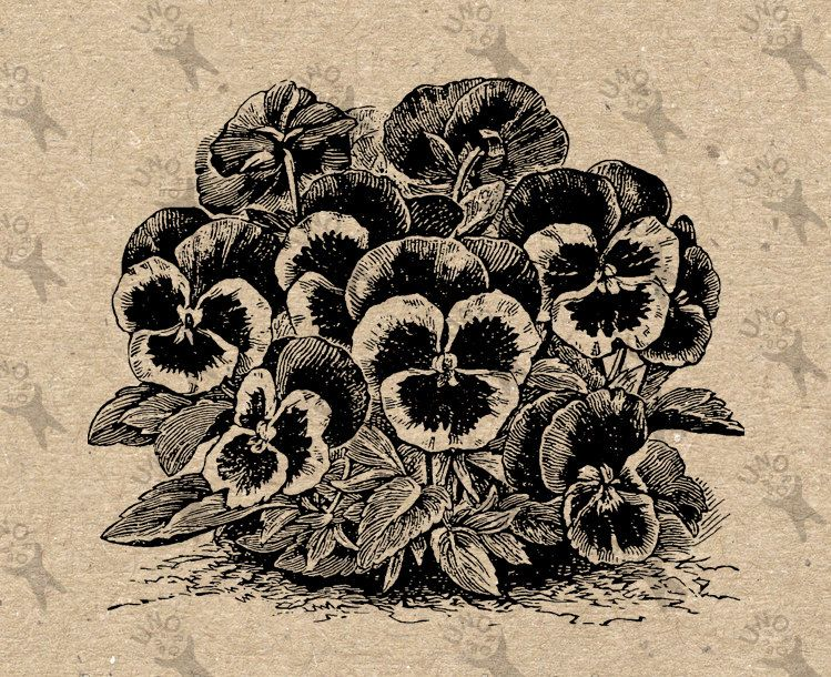 Vintage image Pansy Flower Retro drawing Instant Download Digital printable Black and White  clipart graphic -  burlap, iron on etc HQ300dpi by UnoPrint on Etsy