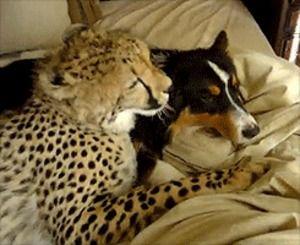 lustiges Bild 'Tierliebe.gif'- Eine von 3413 Dateien in der Kategorie 'animierte Bilder' auf FUNPOT.