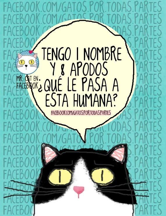 9465a82bbef apodos Arte Con Gatos, Humor De Gatos, Dibujos De Gatos, Amantes De Los