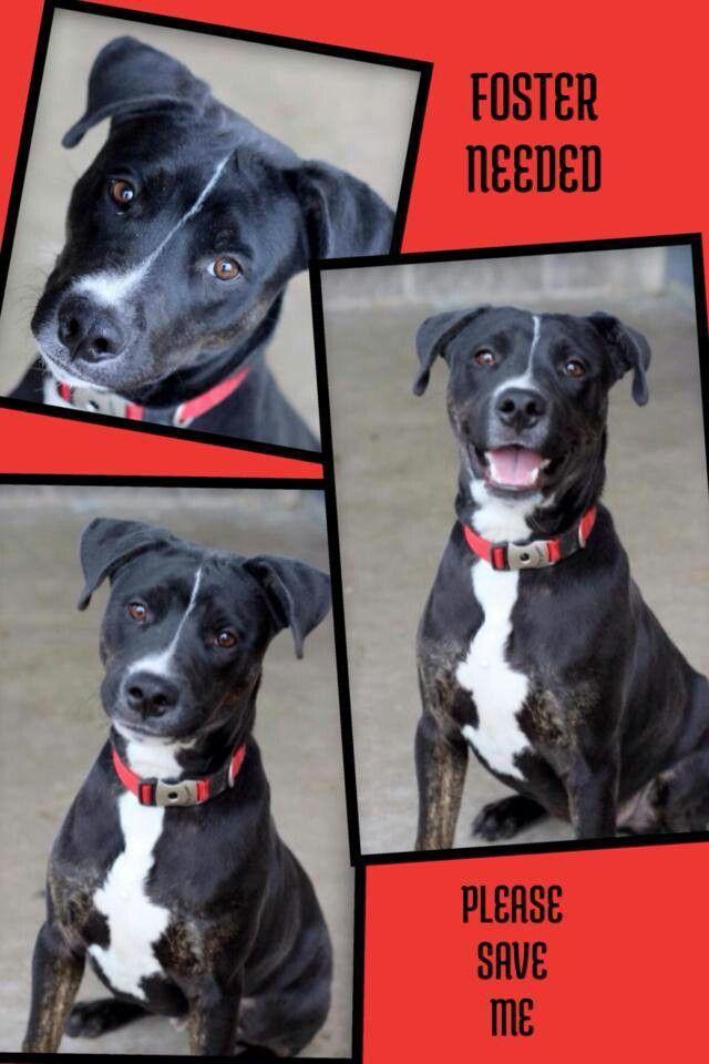 Super Urgent At Fort Worth Tx Animal Rescue Dog Help Unusual