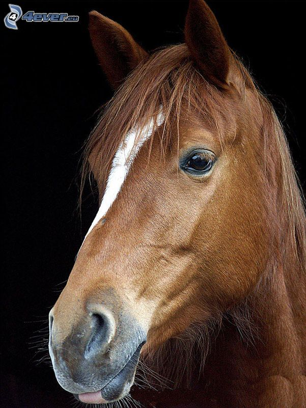 Cheval Brun Cheval Brun Cheval Animaux Beaux