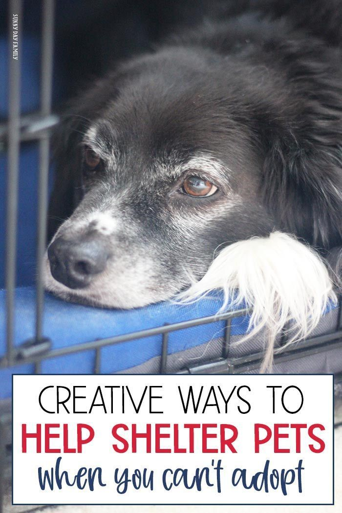 Creative Ways to Help Shelter Animals When You Can't Adopt
