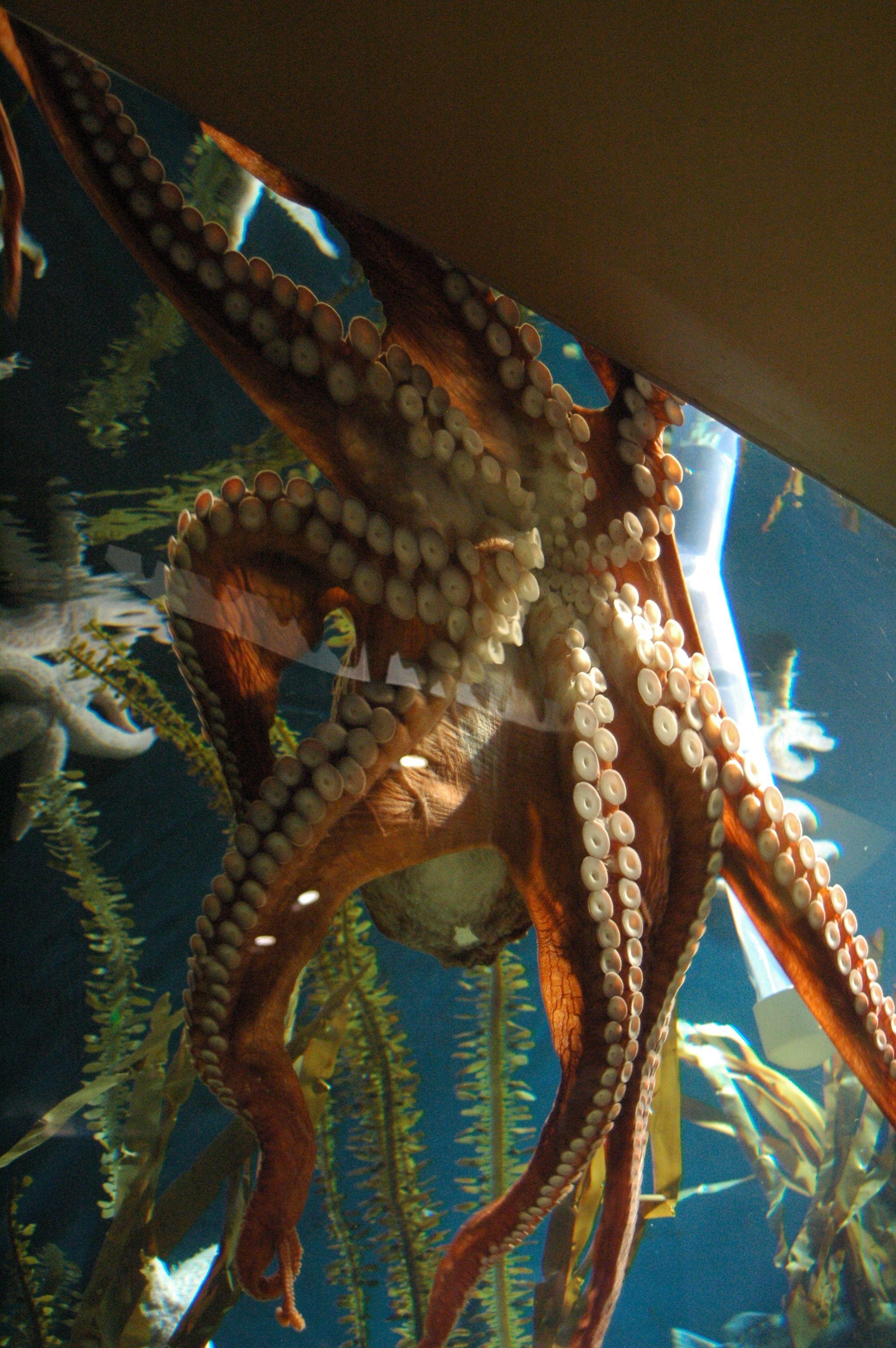 Amazing Underwater Sea Life at the Tennessee Aquarium in Chattanooga ...