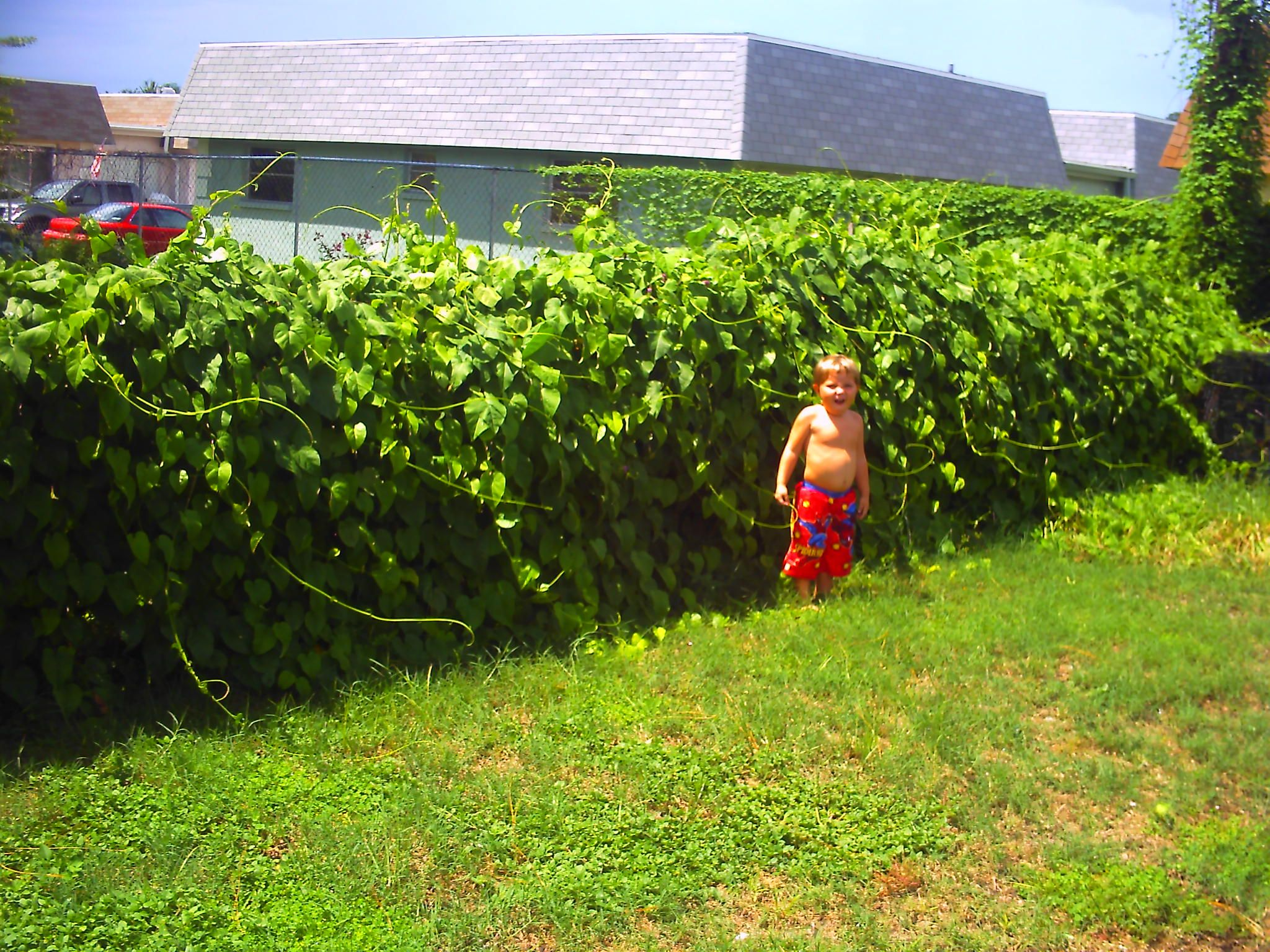 How To Conceal Chain Link Fences 171 Delaware Fence Company