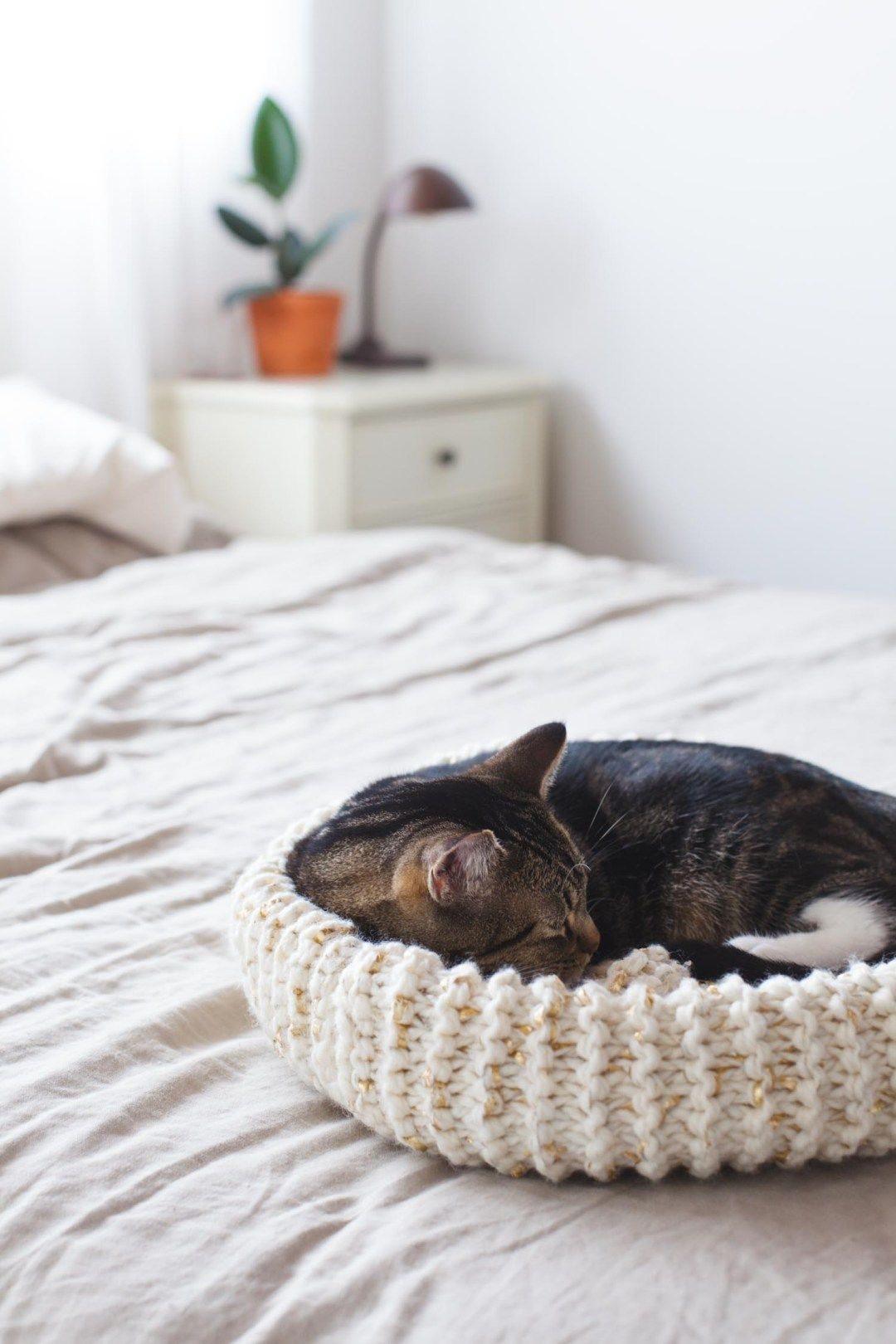 How to Knit the Purrfect Cat Bed | Knitted cat, Knitting ...