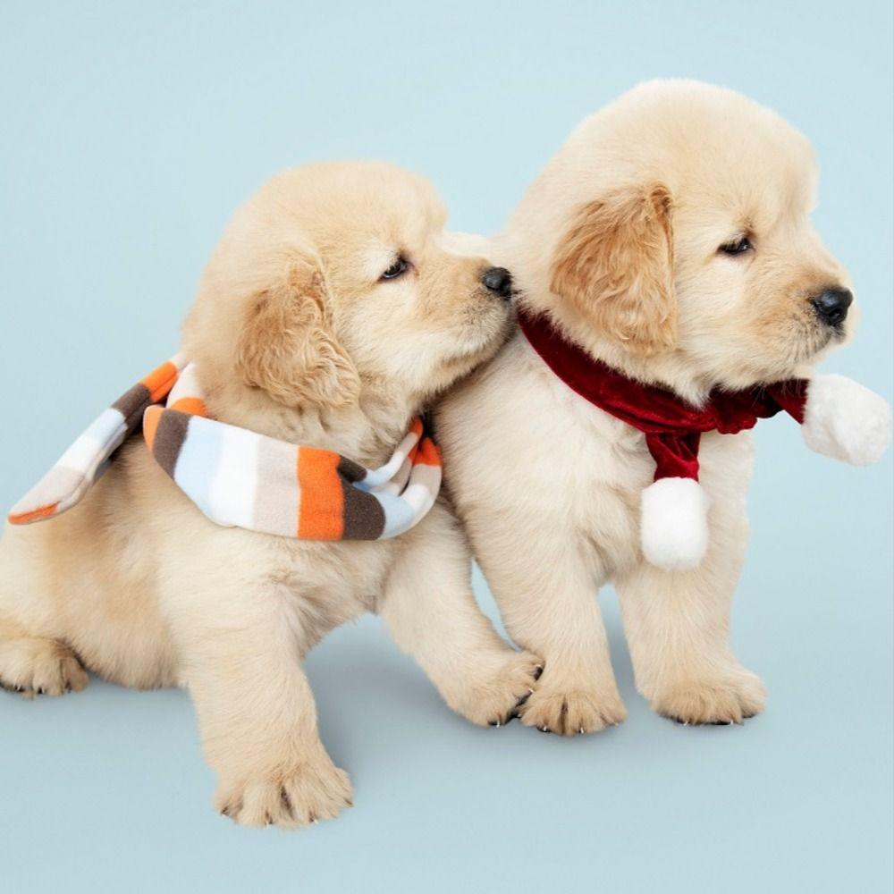Golden Retriever Puppies In 2020 Retriever Puppy Puppies Puppy Training