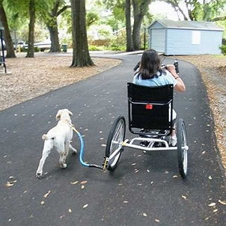 Btl Dog Walk Leash For Use With Mobility Scooters And