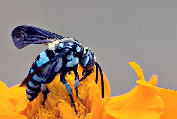 I knew there was blue bees! I KNEW IT | My Style | Pinterest ...