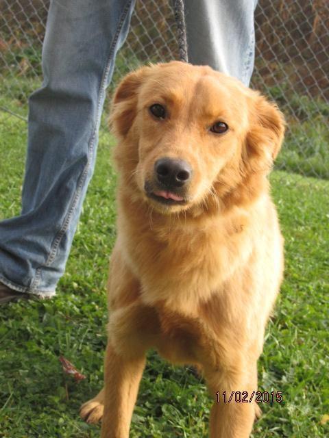 Adopt Bea On Australian Shepherd Dogs Australian Shepherd