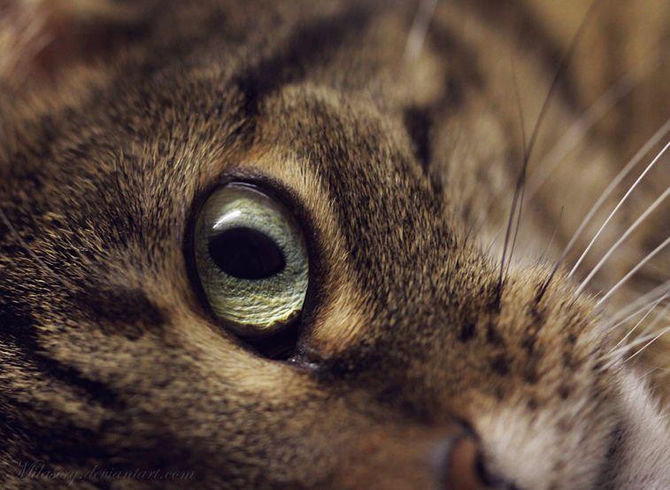 Cat Eye by Milasery.deviantart.com on @deviantART