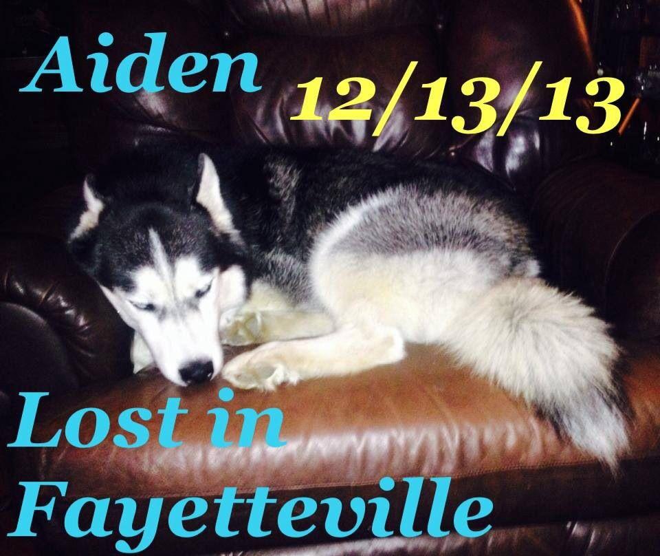Pin By Us Lost Dog Registry On Arkansas Us Lost Dog Registry