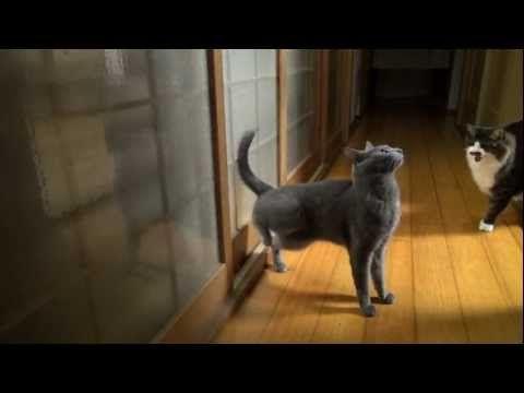 Open The Door Pleaseeeee高速連打ミーミーちゃん 子猫 ねこ 動画 ペット用品
