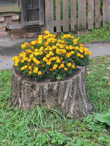 Plantar flores en un tronco viejo | detalles | Pinterest | Gardens ...