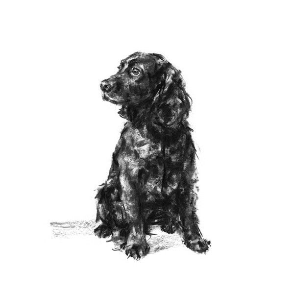 COCKER SPANIEL ON CHAIR CHARMING DOG ART PRINT MOUNTED READY TO FRAME