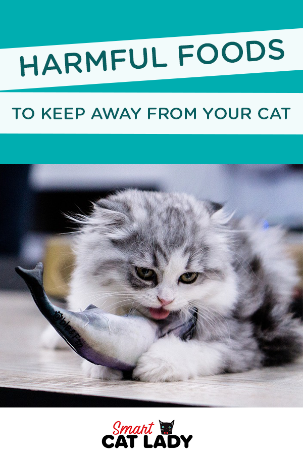Harmful Food to Keep Away from Your Cat Cat problems