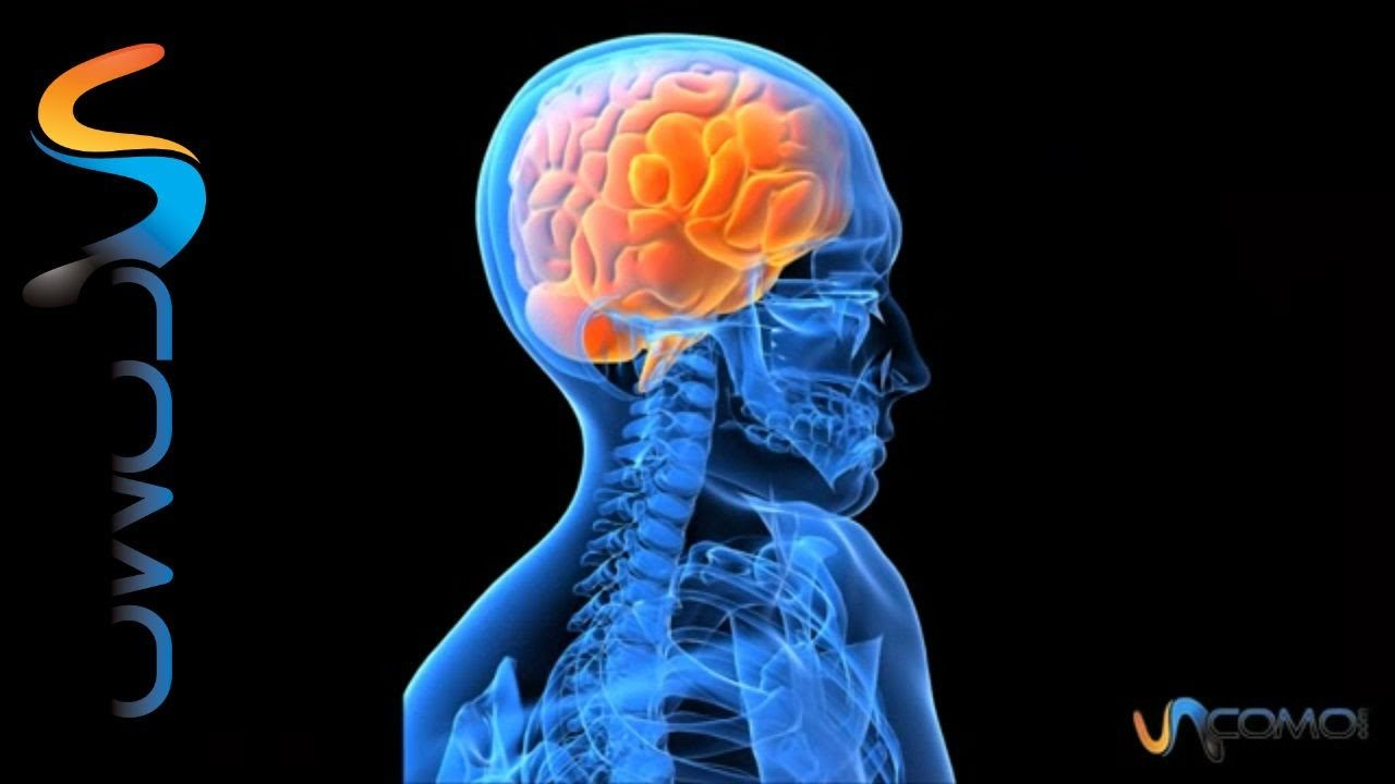 MI CEREBRO ANATOMIA Aplicación My Brain Anatomy para estudiar la ...