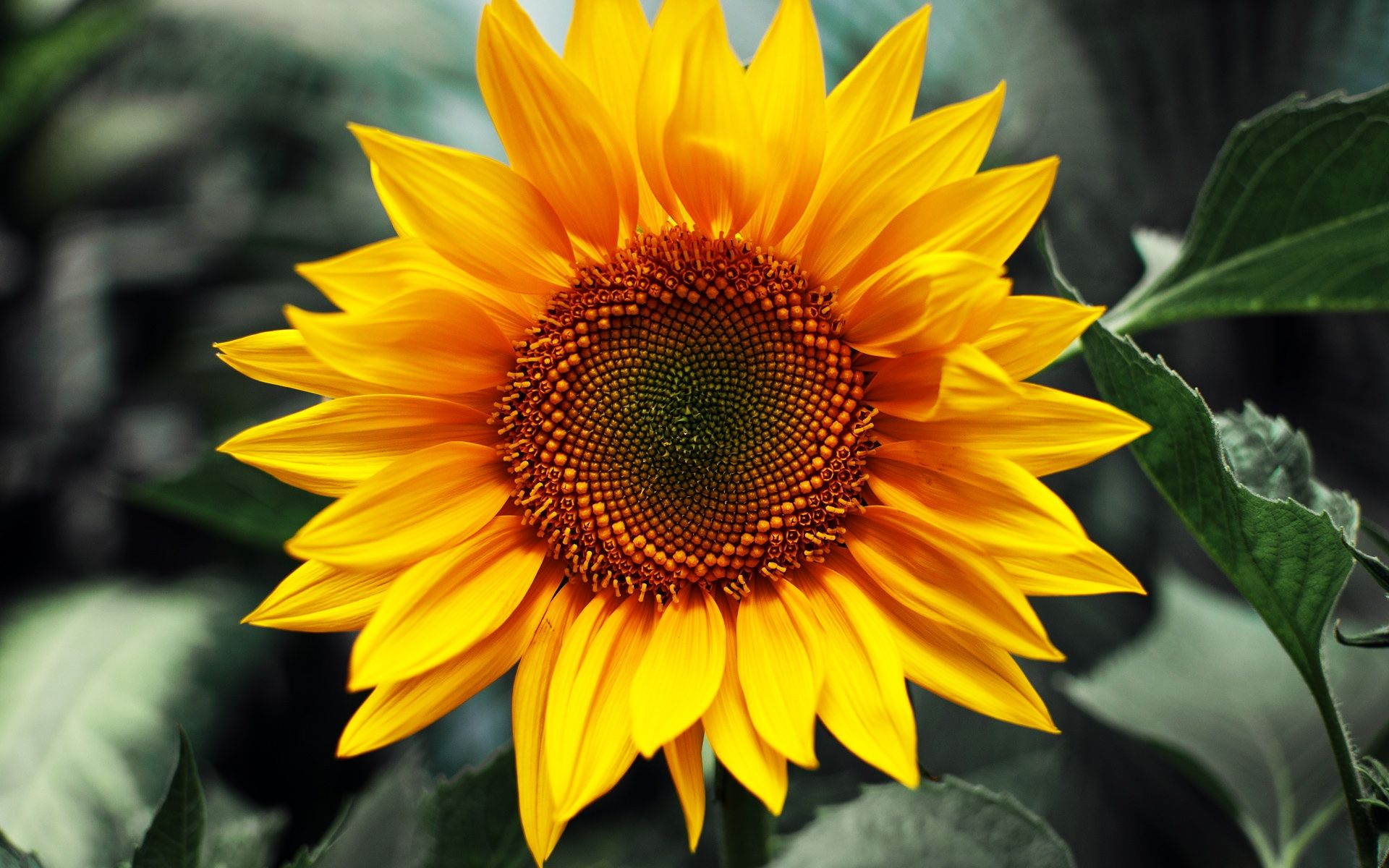 10 Ways To Manage Your Mental Health Sunflower wallpaper