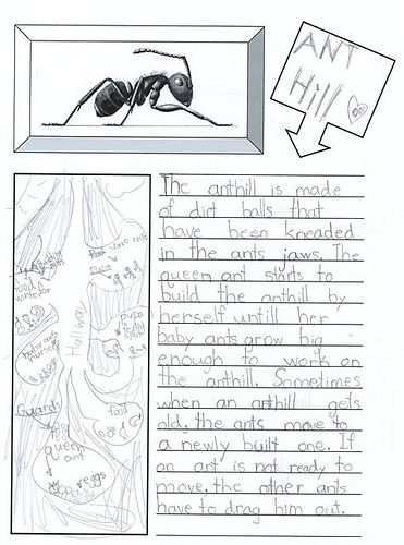 Ants Nature Study Observation Journal Pages Template FREE - free journal templates