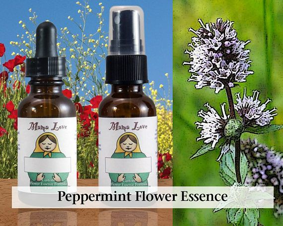 Peppermint Flower Essence 1 Or 2 Oz Dropper Or Spray Aura Mist For Mental Alertness Clear Thinking Feeling Awake Dogwood Flowers Stock Flower Peppermint