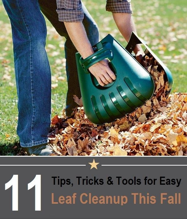 11 Tips, Tricks And Tools For Easier Leaf Cleanup This