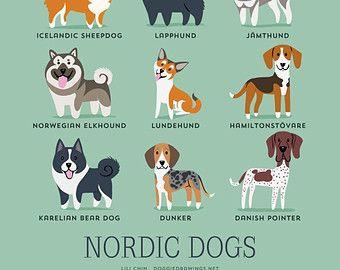 Dog Breeds Print Eastern European Dogs Art Print Dog Breeds Etsy Dog Breeds Bear Dog Dog Illustration