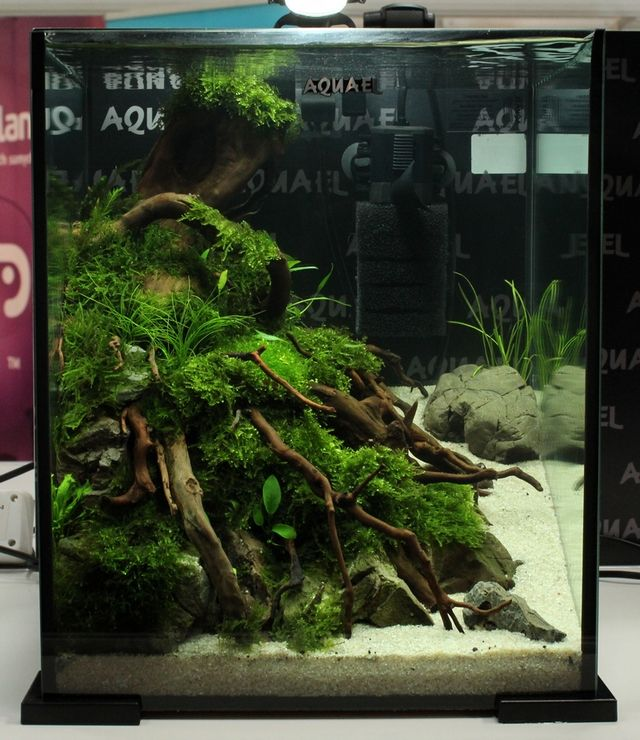 High Quality Aquarium Ideas · Cube Aquascape ...