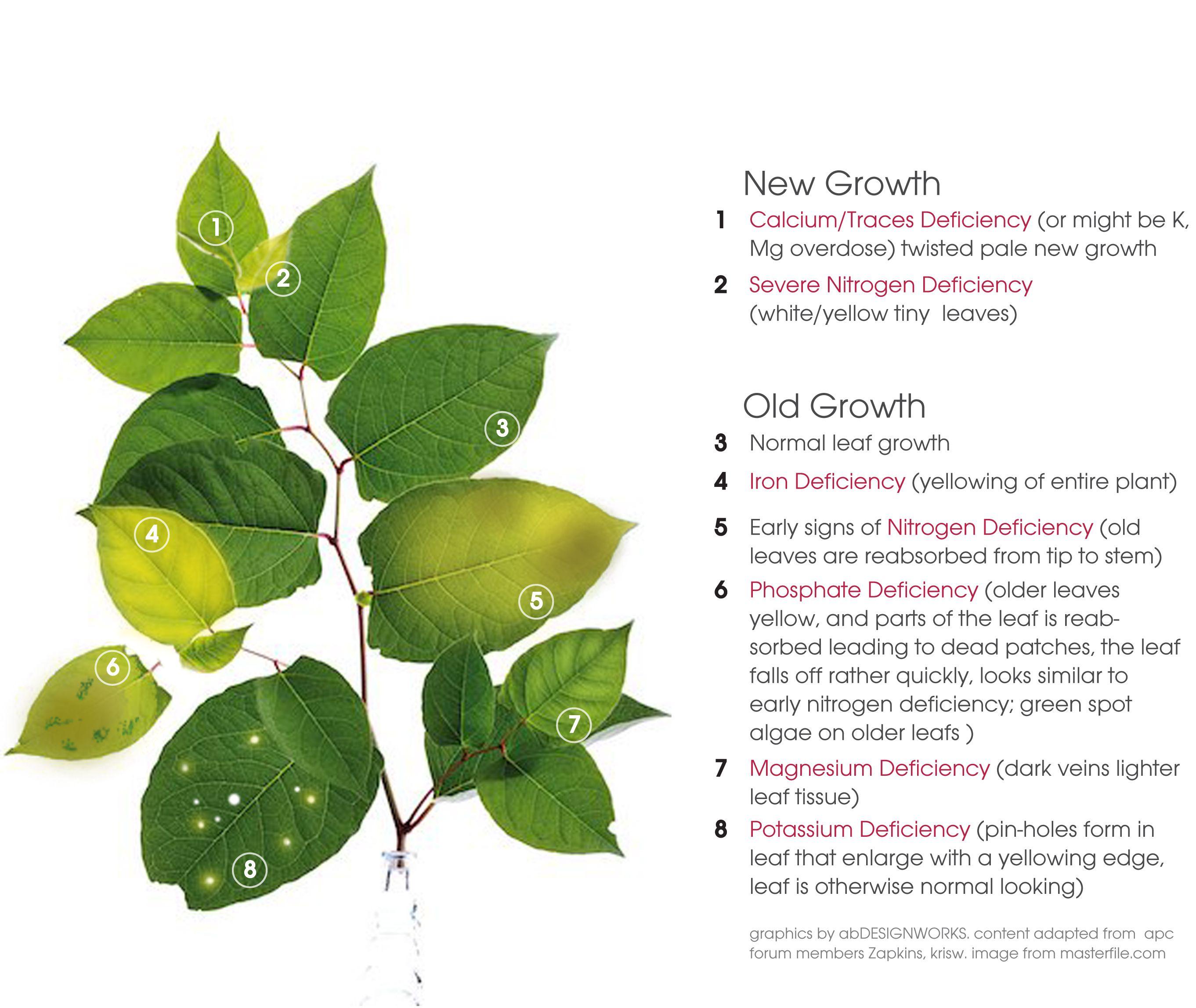 deficiencies in plants | Gardening | Plants, Freshwater plants