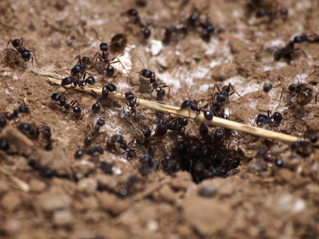 Zimt Im Garten Ein Sinnvoller Pflanzenschutz Plantura Ameisen Im Garten Ameisen Pflanzenschutz