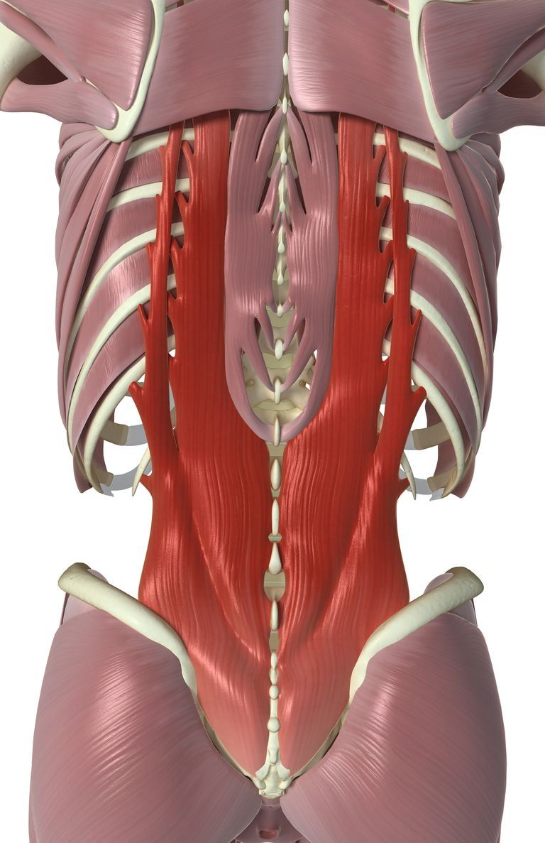 Back muscles that move and stabilize your spine | Anatomía