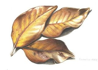 Dry leaves - with coloured pencils | Ideas for the House in